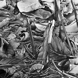 Aaron Spong - Leaves