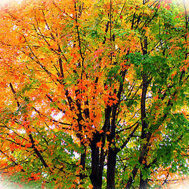 Cynthia Guinn - Leaves Changing Colors