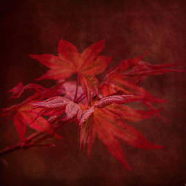 Jai Johnson - Leaves of the Japanese Maple