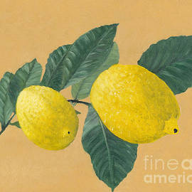Kerstin Ivarsson - Lemon tree branch with two lemons.