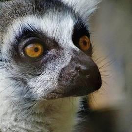Savanna Paine - Lemur