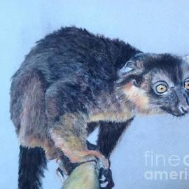Tanya Patey - Lemur