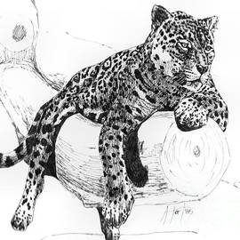 Audrey Van Tassell - Leopard At Rest
