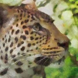 Dan Sproul - Leopard In The Wild