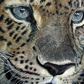 Katja Sauer - Leopard