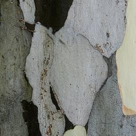 Denise Clark - Leopard Tree Bark Abstract 4