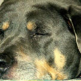 Kathy Barney - Let Sleeping Rottweilers Lie
