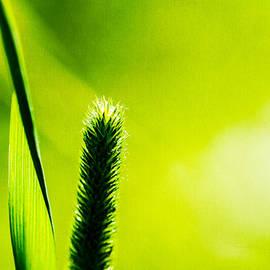 Alexander Senin - Let World Be Green