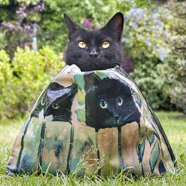 Adrian Campfield - Letting the cat out of the Bag