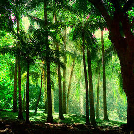 Jenny Rainbow - Light in the Jungles. Viridian Greens. Mauritius