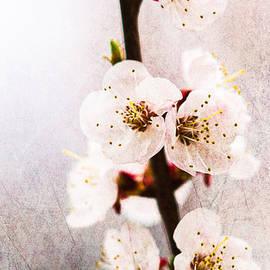 Alexander Senin - Light Of Spring 1