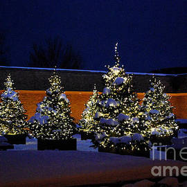 Nancy Mueller - Lighted Trees With Snow