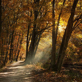 Robin-lee Vieira - Lighting The Path
