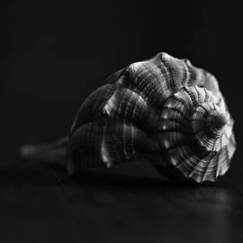 Terry Leasa - Lightning Whelk in Black and White