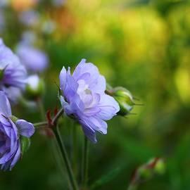 Mo Barton - Lilac Beauty