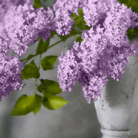 CJ Anderson - Lilacs in White