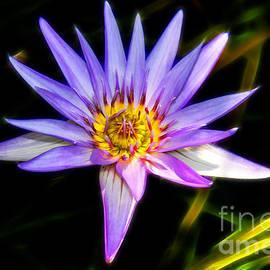 Mariola Bitner - Lilac Lily