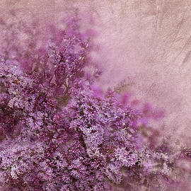 Svetlana Sewell - Lilac Splash