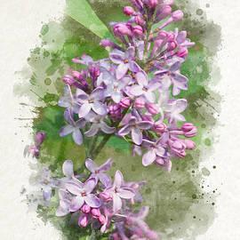 Christina Rollo - Lilac Watercolor Art