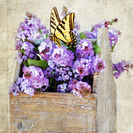 Darren Fisher - Lilacs and the Butterfly