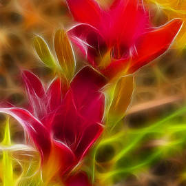 Gary Gingrich Galleries - Lilies-6338-Fractal