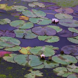 Viktor Savchenko - Lilies In Water Garden