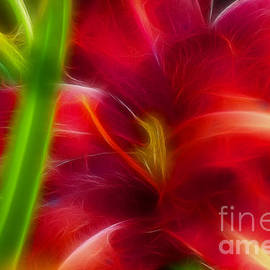 Gary Gingrich Galleries - Lily-6059-Fractal