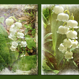Mother Nature - Lily of the Valley - Duet in White
