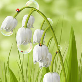 Veronica Minozzi - Lily of the valley