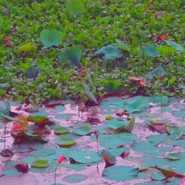 Usha Shantharam - Lily Pond 2