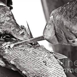 Agus Aldalur - Limpiador De Pescado