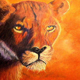 Jay Johnston - Lion at Sunset