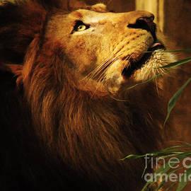 Olivia Hardwicke - The Lion Of Judah