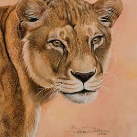 Tonya Butcher - Lioness