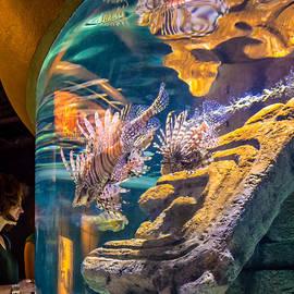 Steve Harrington - Lionfish Display