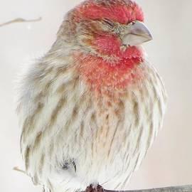 Lori Frisch - Little Bird Nap