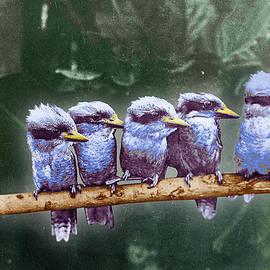 Tony Rubino - Little Birds On A Branch