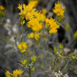 AR Harrington Photography - Little bit of Yellow