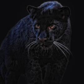 Joachim G Pinkawa - little black Jag