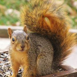 Lori Frisch - Little Bushy Tail