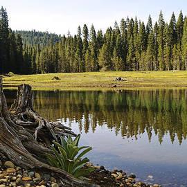 Pamela Patch - Little Grass Valley California