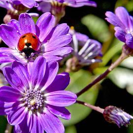 Patricia Sanders - Little Ladybug