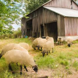Mary Timman - Little Lambs