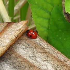 Janet Otto - Little Lazy Ladybug
