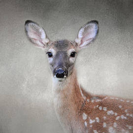 Jai Johnson - Little Miss Lashes - White Tailed Deer - Fawn
