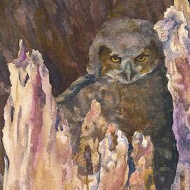 Anne Gifford - Little Owl