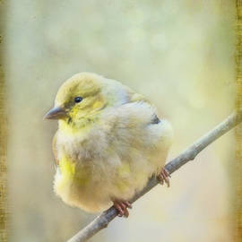 Debbie Portwood - Little Softie Gold Finch II