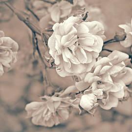 Jennie Marie Schell - Little Tea Roses Beige