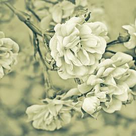 Jennie Marie Schell - Little Tea Roses Celadon Green