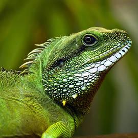 Aleksandra Bandomir - Lizard